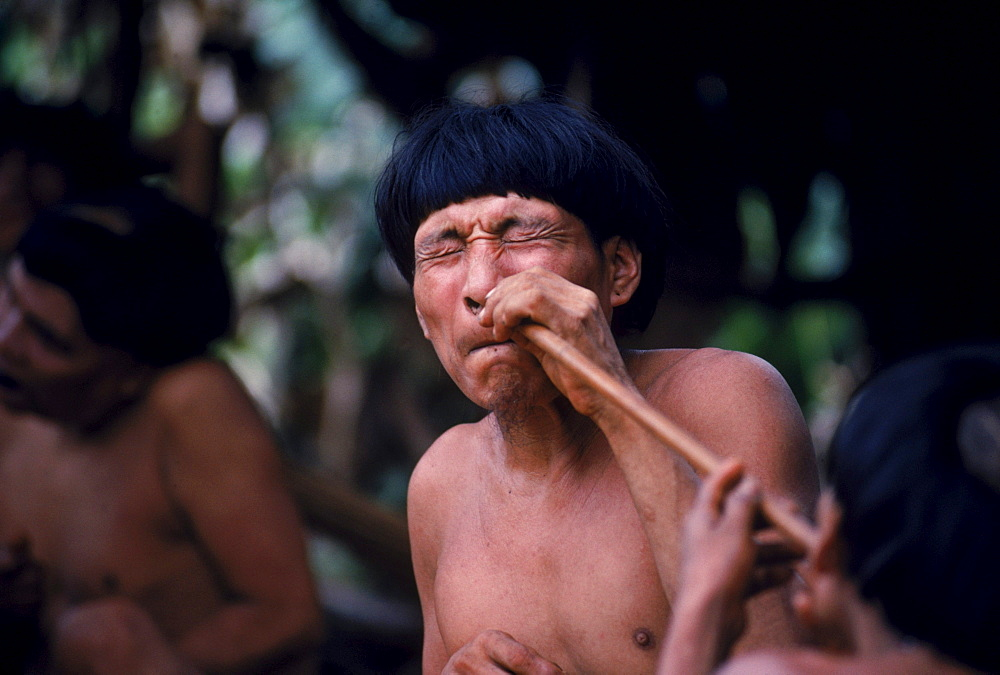 the yanomamo of the amazon basin Scientist a fierce advocate for a 'fierce people' the yanomamo are revealed in his milestone study may 15 the amazon basin's 24,000 yanomamo indians.